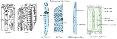 Parts Of A Tissue Plant Tissues Learn Biology Class 9 Amrita Vidyalayam