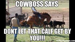 Calves Meme - cowboss says dont let that calf get by you meme custom 22194