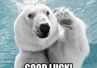 Good Luck Cat Meme - awesome good luck cat meme good luck cat memes maneki neko maze