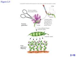 flower companies chapter 02 lecture outline copyright the mcgraw hill companies