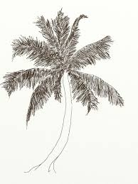 how to draw coconut tree with pencil step by step tutorial