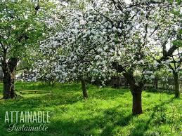 fruit choosing trees for edible landscaping