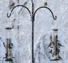 birds unlimited choosing seed to attract the most birds for