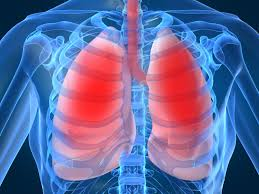 the respiratory system archives interactive biology with leslie