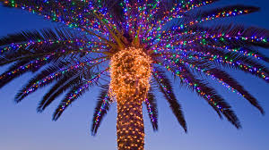 delightful decoration palm tree with christmas lights winter