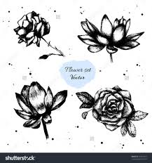 pencil art photo flower sketches loversiq