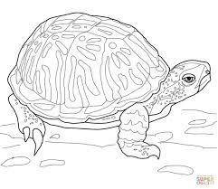 turtle coloring pages for kids nesting kemps ridley sea turtle