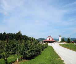 boone christmas tree farms christmas tree