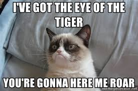 Eye Of The Tiger Meme - eye of the tiger meme best image of tiger 2018