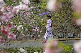biggest crowd yet for 11th annual cherry blossom fest the san