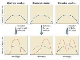 patterns of selection evolution and natural selection