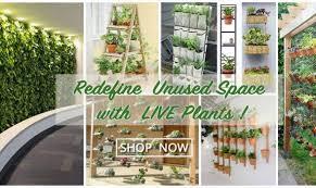 Best Plants For Vertical Garden - best indoor vertical garden plants wholesale garden plants