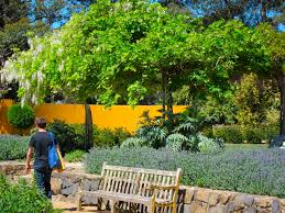 blue mountains native plants what are the best public gardens to visit in the blue mountains