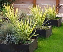 great idea for plants on a patio privacy and shade in small area