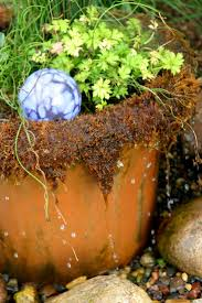 49 best water features ponds aquatic plant pots and unusual
