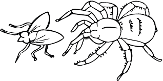 Spider Color Pages Free Printable Spider Coloring Pages For Kids Clip Art Library by Spider Color Pages