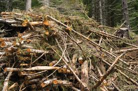 United States Department Of Agriculture Rural Development Of Forest Biomass Raise Hurdles For Rural Development