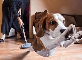 Best Pet Vaccum The Best Vacuum Cleaner For Pet Hair Suction