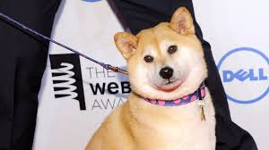 Dogecoin Meme - even dogecoin is rallying in this cryptocurrency boom