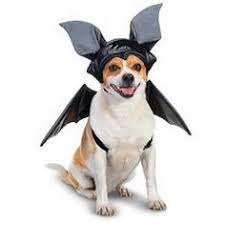 Lps Halloween Costumes Fashion Pet Halloween Witch Costume Dogs Medium