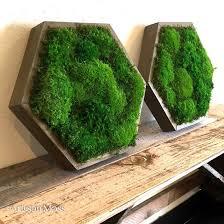 Interior Plant Wall Best 25 Moss Wall Art Ideas On Pinterest Moss Wall Moss Art