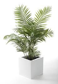 closer2nature artificial 4ft areca palm tree portofino planter not