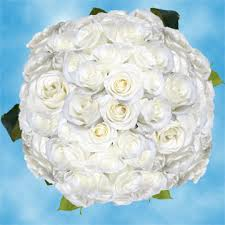 Global Roses Long Stem White Roses Wholesale Valentine U0027s Day Flowers Global Rose