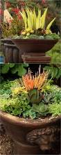 succulents meaning best 25 rainbow succulent ideas on pinterest colorful