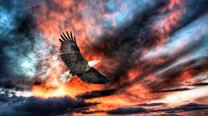 beautiful birds hd wallpapers free download