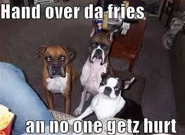 boxer dog meme funny dog memes i top 50 of all time i world wide interweb