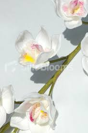 Artificial Orchids Fresh Touch White Cymbidium Orchids Artificial Orchids 21 10