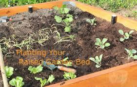 how to plant a garden home design