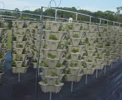 Watering Vertical Gardens - 34 best vertical gardening lovely images on pinterest vertical