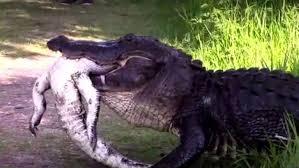 imagenes animales australia así de tenebrosa es la vida salvaje en australia algunos animales