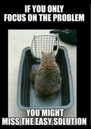 Stupid Cat Meme - that s a stupid cat meme by stevetrabajo memedroid