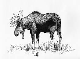 rainbow moose michaela istok is a visual designer and