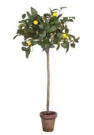 393 best large indoor plants images on large indoor