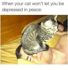 Depressed Cat Meme - when your cat won t let you be depressed in peace cats meme on me me