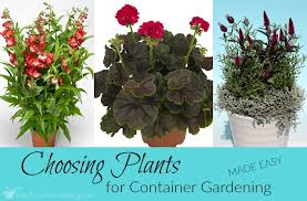 container flower gardening u0026 choosing plants for container gardening