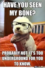 Hipster Dog Meme - hipster dog by josephmcelrath meme center