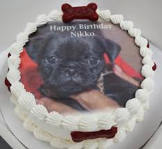 san diego u0027s 1st dog bakery paw pleasers