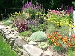Zone Gardening - vegetable garden schedule zone 7 conifers for shade garden plans