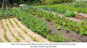 eartheasy blogmulch your garden to beat the heat eartheasy blog