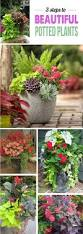 Tropical Potted Plants Outdoor - 348 best outdoor flower container ideas images on pinterest