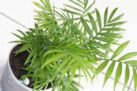 inside house plants garden plants inside house indoor palm