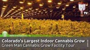 colorado u0027s largest indoor cannabis grow green man grow facility