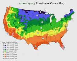zone map for usa cold hardy bamboo