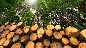 missing the wood for the trees business line