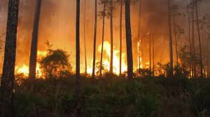 Wildfire Chicago by Wildfire In Okefenokee Refuge Grows Past 90 Square Miles