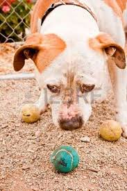 adoptable stock photos pictures royalty free adoptable images